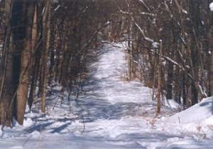 Tower Hill sled run