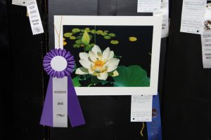 Photo Show at the Mountain Lakes Library VOTING OPEN TO PUBLIC