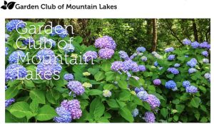 Garden Club Program - All about Hydrangeas